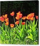 Sunkissed Tulip Garden Canvas Print
