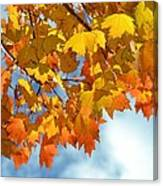Sunlight And Shadow - Autumn Leaves Two Canvas Print