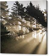 Sunlight Breaks Through The Fog Canvas Print