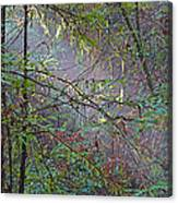Sunlight Highlights In Armstrong Redwoods State Preserve Near Guerneville-ca Canvas Print