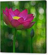 Sunlight On Lotus Flower Canvas Print