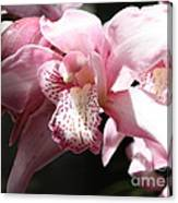 Sunlight On Pink Orchid Canvas Print