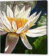 Sunlight On White Lily Canvas Print
