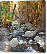 Sunlight Over Rocky Andreas Creek In Indian Canyons-ca Canvas Print