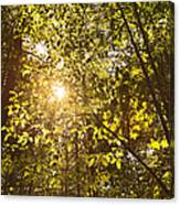 Sunlight Shining Through A Forest Canopy Canvas Print
