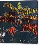 Sunlight Stars On Sumac Canvas Print