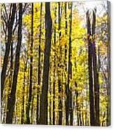 Sunburst Through Trees Canvas Print