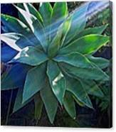Sunlight's Beneficary Canvas Print