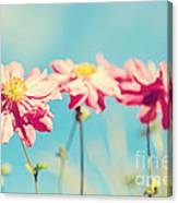 Sunlit Anemone Flowers With Cross Processed Effect Canvas Print