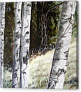 Sunlit Aspens Davis Creek Montana Canvas Print