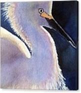 Sunlit Egret Canvas Print