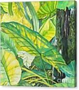 Sunlit Elephant Ears Canvas Print