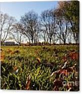 Sunlit Fall Lawn Canvas Print