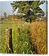 Sunlit Fence Posts In Weeds Canvas Print