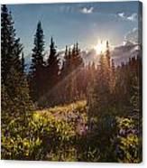 Sunlit Flower Meadows Canvas Print