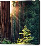 Sunlit from Heaven Canvas Print