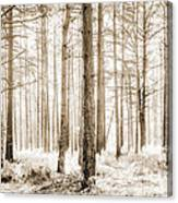 Sunlit Hazy Trees In Neutral Colors Canvas Print
