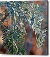 Sunlit Herb Canvas Print