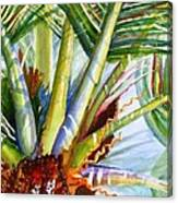 Sunlit Palm Fronds Canvas Print