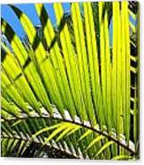 Sunlit Palm Tree  Canvas Print