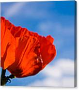Sunlit Poppy Canvas Print