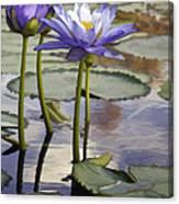 Sunlit Purple Lilies  Canvas Print