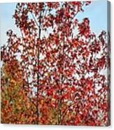 Sunlit Red In November 2012 Canvas Print