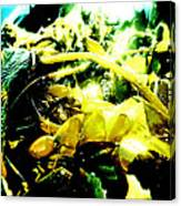 Sunlit Seaweed Canvas Print