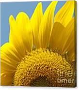 Sunlit Sunflower Canvas Print