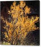 Sunlit Tree In Palo Duro Canyon 110213.06 Canvas Print