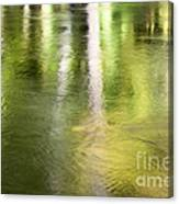 Sunlit Tree Reflections Canvas Print