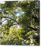 Sunlit Tree Tops Canvas Print