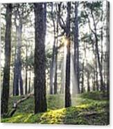 Sunlit Trees Canvas Print