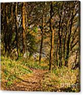 Sunlit Woods In Late Autumn Canvas Print