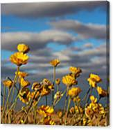 Sunlit Yellow Wildflowers Canvas Print