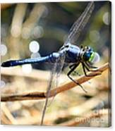 Sunning Blue Dragonfly Square Canvas Print