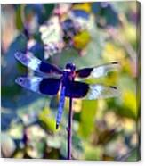 Sunning Dragonfly Canvas Print