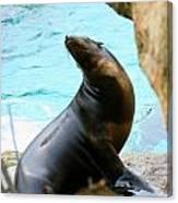Sunning Sea Lion Canvas Print