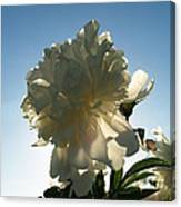 Sunning The Back-side Of Beautiful  Canvas Print