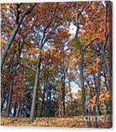 Sunny Autumn Day 3 Canvas Print