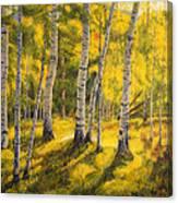 Sunny Birch Canvas Print