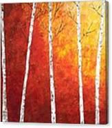 Sunset Birches Canvas Print