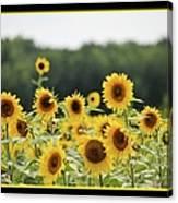 Sunny Days 8466 Canvas Print