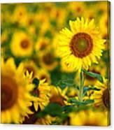 Sunny Delight Canvas Print