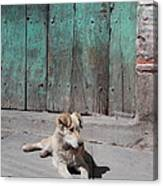 Dog Enjoying A Sunny Doorstep Canvas Print