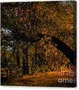 Sunny Fall Afternoon Canvas Print