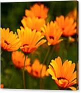 Sunny Floral Canvas Print