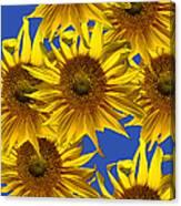 Sunny Gets Blue Canvas Print