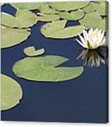 Sunny Lily Pond Canvas Print