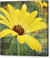 Sunny Moment Canvas Print